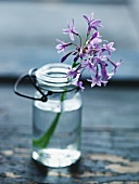 A garlic flower in a glass