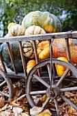 Handcart full of pumpkins