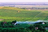 A wide view over a vineyard to the horizon