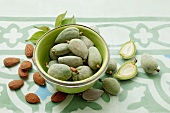 Green almonds and brown almond seeds