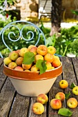 Freshly picked apricots in a ceramic bowl on a table outside