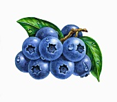 A small bunch of blueberries with leaves (illustration)