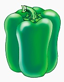 A green pepper (illustration)