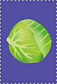 White cabbage (illustration)