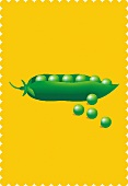 A pea pod and peas (illustration)
