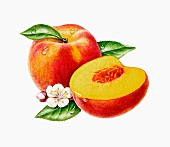 A whole peach and half a peaches with flowers and leaves (illustration)
