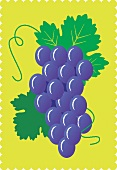 Purple grapes and leaves against a yellow background (illustration)