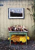 Herbststilleben mit indischem Mais und gelben Chrysanthemen