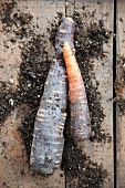 Purple carrots (Anthonina)