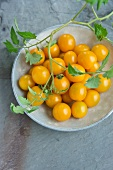 Yellow tomatoes with leaves