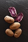 Blauer Schwede potatoes on a slate surface