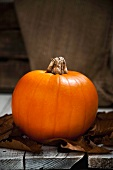 A pumpkin on autumnal leaves