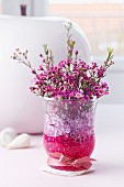 Posy of waxflowers (Chamelaucium uncinatum) in glass vase with decorative pebbles