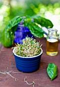Ramekin Full of Sprouts; Fresh Basil
