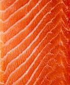 Raw salmon fillet (full frame)