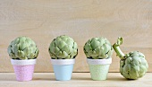 Four mini artichokes; three in small flowerpots and one alongside