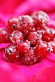 Sugared redcurrants (close-up)
