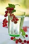 A glass of water with redcurrants on a table in the garden