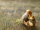 Birch boletes on a wooden surface