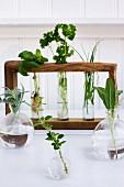 A decorative herb lab