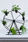 A herb Ferris Wheel