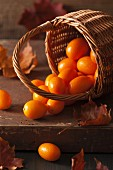 A still life featuring kumquats in a basket and autumn leaves