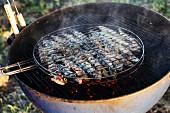 Sardines being barbecued