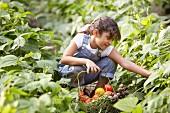 Girl picking vegetables in garden