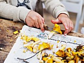 A girl cutting fresh chanterelle mushrooms on a piece of newspaper