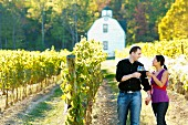 Couple drinking wine in a vineyard.