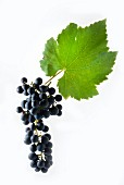 Cabernet Cubin grapes with a vine leaf