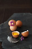 Eggs, whole and cracked, with a feather and a flower on a black stone
