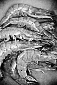 Raw king prawns (black-and-white image)
