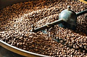 Coffee beans being roasted in a drum