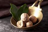 Nutmegs in a measuring spoon