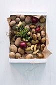 Various potatoes with red onions and herbs in a box