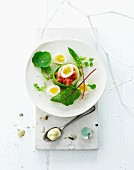 Beef tartar with quail's eggs and mayonnaise for Easter