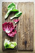 Bok choy, radicchio and lettuce
