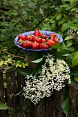 Fresh organic strawberries in a blue enamel bowl on an old wooden fence in a garden
