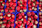 Strawberries in blue plastic punnets