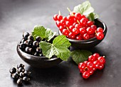 Black currants and redcurrants