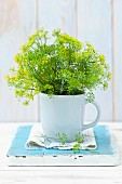 Fresh, flowering dill in a mug