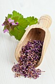 Dried deadnettle flowers on a wooden scoop for making wild herb tea
