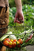 A man carrying freshly harvested vegetables in a wire basket from a garden