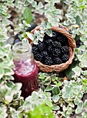 A blackberry smoothie and a basket of fresh blackberries