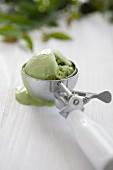 Green tea ice cream in an ice cream scoop