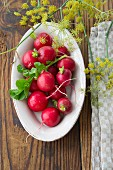 Radishes in a oval dish with dill flowers