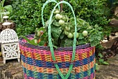 Tomato plants in a colourful plastic basket outside on a stone wall