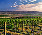Bel Villa Vineyard and house of Tom Hedges (owner of Hedges Cellars) on Red Mountain. Benton City, Washington, USA. [Red Mountain AVA]