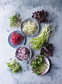 An arrangement of various sprouts